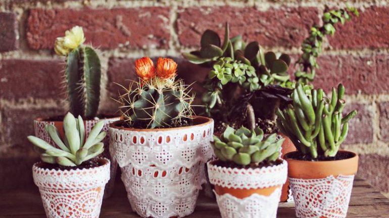 Nápady, ako štýlovo vyzdobiť kvetináče