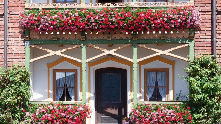 Ako mať krásne muškáty plné kvetov