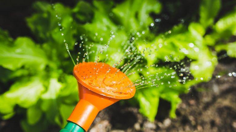 Ako získať osivo z vašej záhradky na ďalšie sadenie?