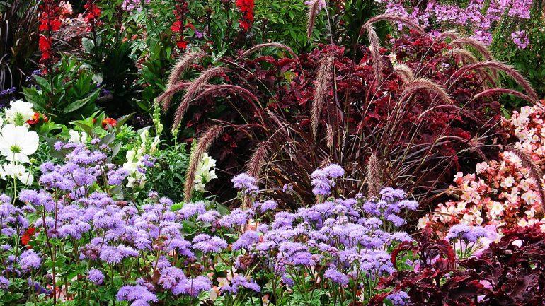 Čo sú jednoročné a dvojročné rastliny? Toto treba vedieť, ak ich chceme pestovať