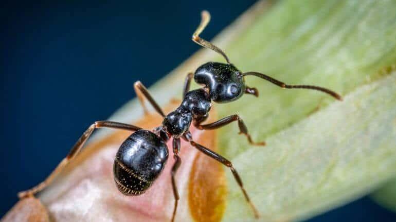 Ako zatočiť s mravcami