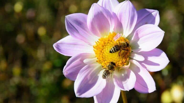Ako zabrániť nechcenému kríženiu rastlín?