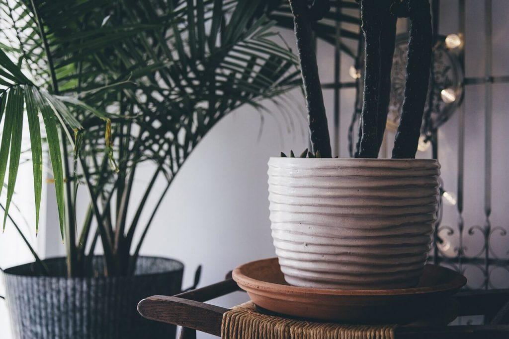 Aké izbové rastliny dať do kencelárie