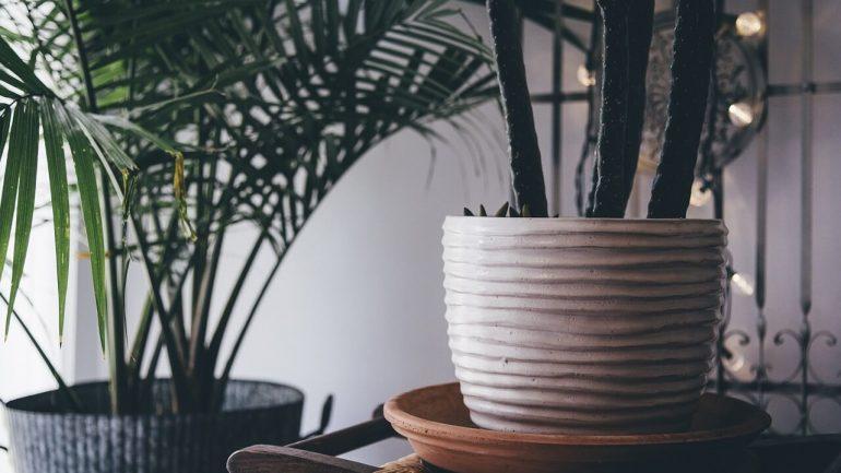 Izbové rastliny ako zázračné čističky vzduchu? Nie tak celkom, varujú vedci