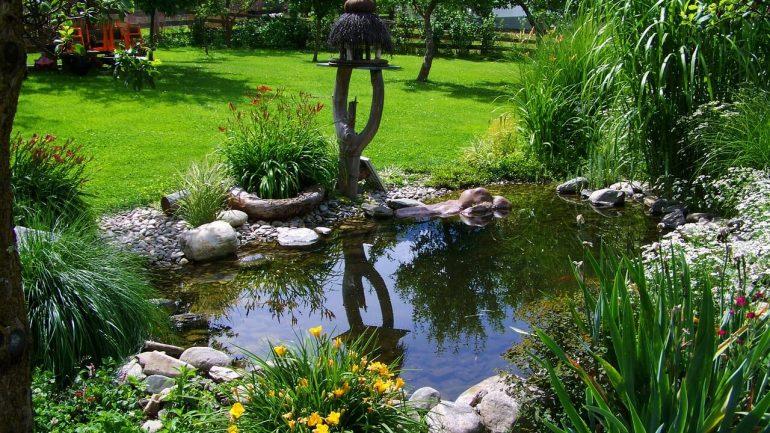 Aké rastliny vysadiť pri vodnej ploche vo vašej záhrade
