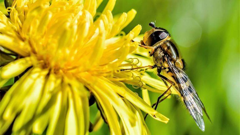 Namiesto chemikálií? Tieto rastliny z vašej záhrady bojujú proti hmyzu