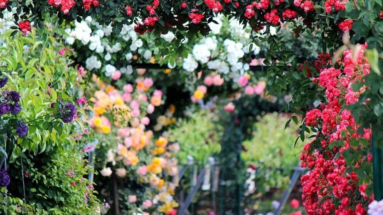 Ako pripraviť rastliny v záhrade pred odchodom na dovolenku