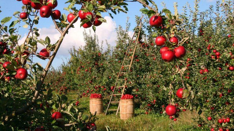 Recept: Jablkový lekvár so škoricou