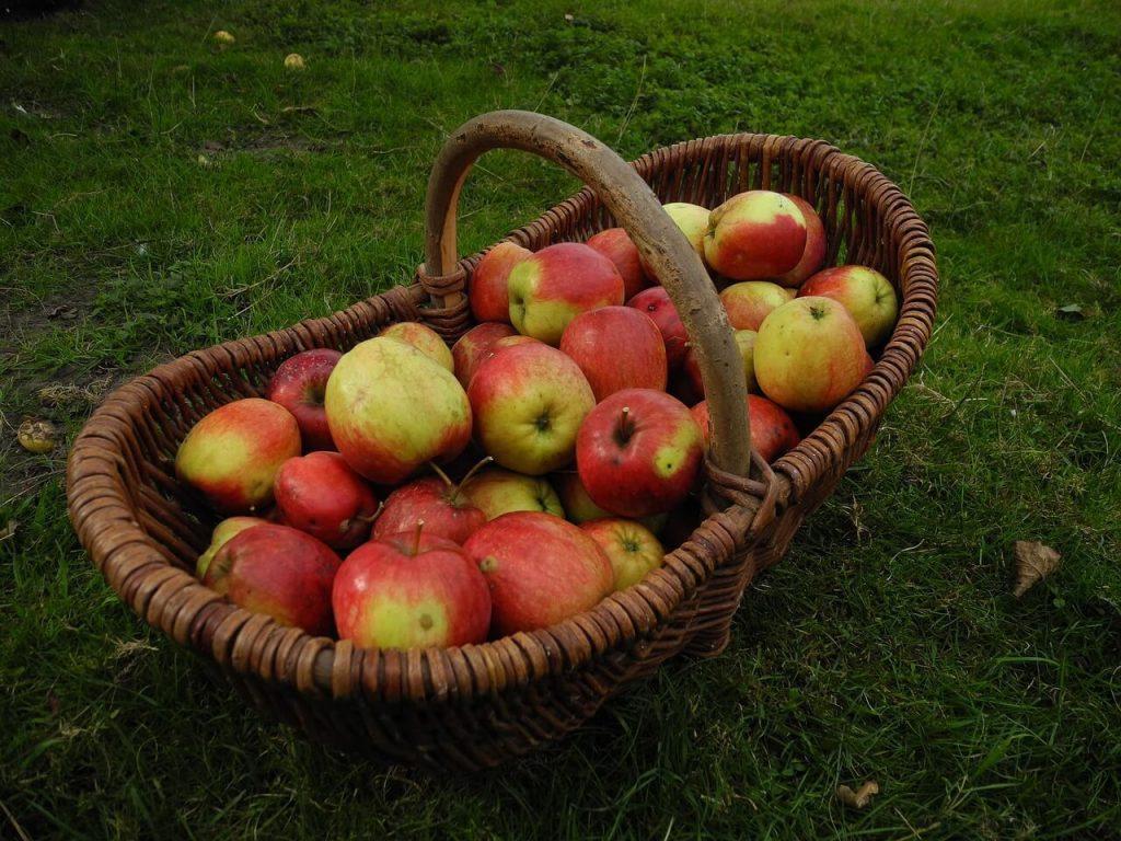 jablka (1)