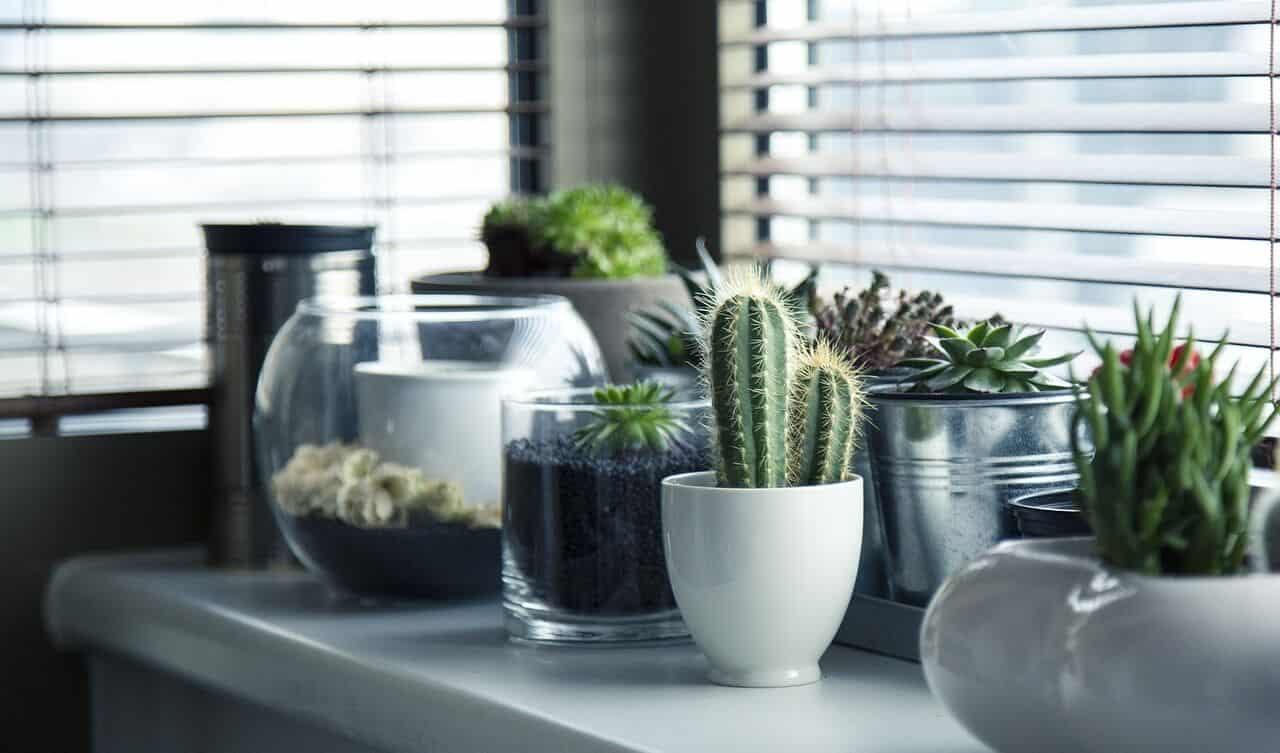 Izbové rastliny dokážu prečistiť vzduch v dome