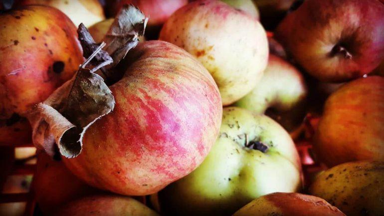 Recept: Kompót zo šúpaných jabĺk