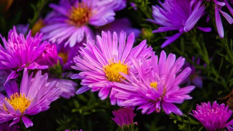 5 nádherných kvetov, ktoré nemôžu chýbať v letnej záhrade