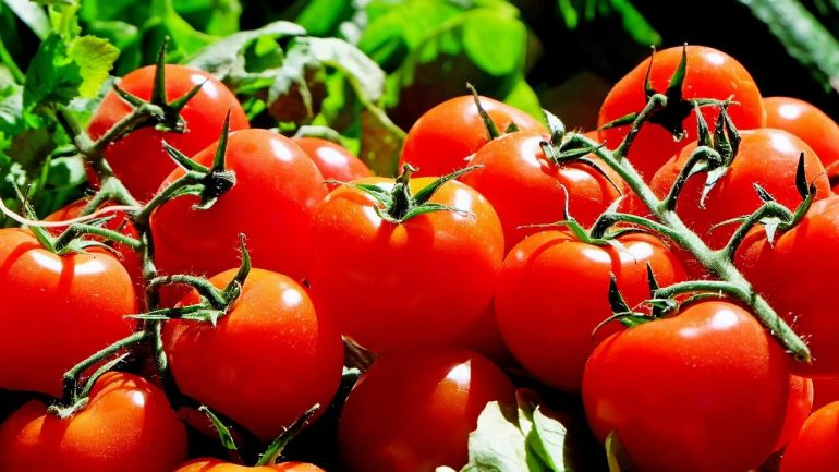 Rýchle spôsoby, ako zachovať paradajkové semená pre ďalšiu výsadbu