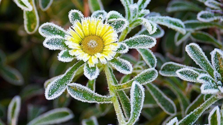 ako uchovať rastliny pred mrazom