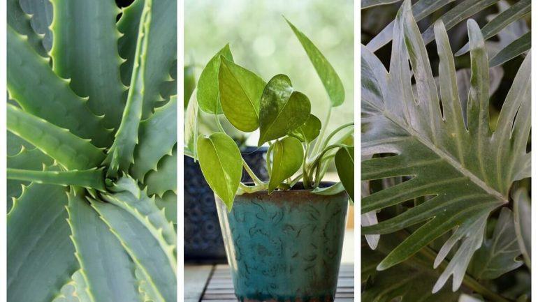20 krásnych izbových rastlín, ktoré vyžadujú málo starostlivosti, časť prvá