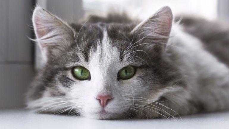 Pestujete trávu pre mačku? Toto by ste mali vedieť