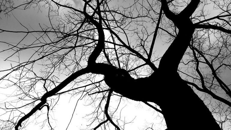 strom, energia zo stromov