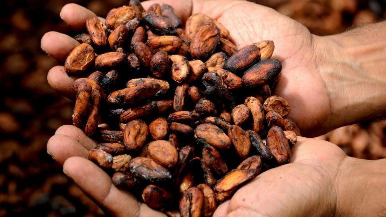 Kakaovník – jedlo bohov, ktoré predlžuje život