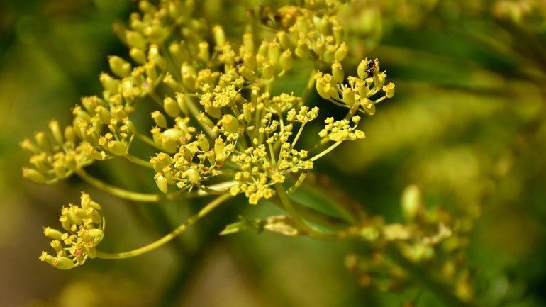 40 byliniek, ktoré urobia vašu stravu zdravšou, časť siedma