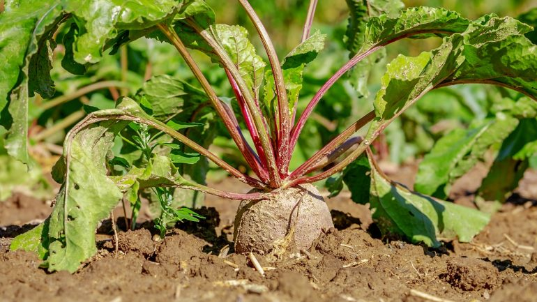 Tieto rastliny zo záhrady zbavia vaše obličky od toxínov
