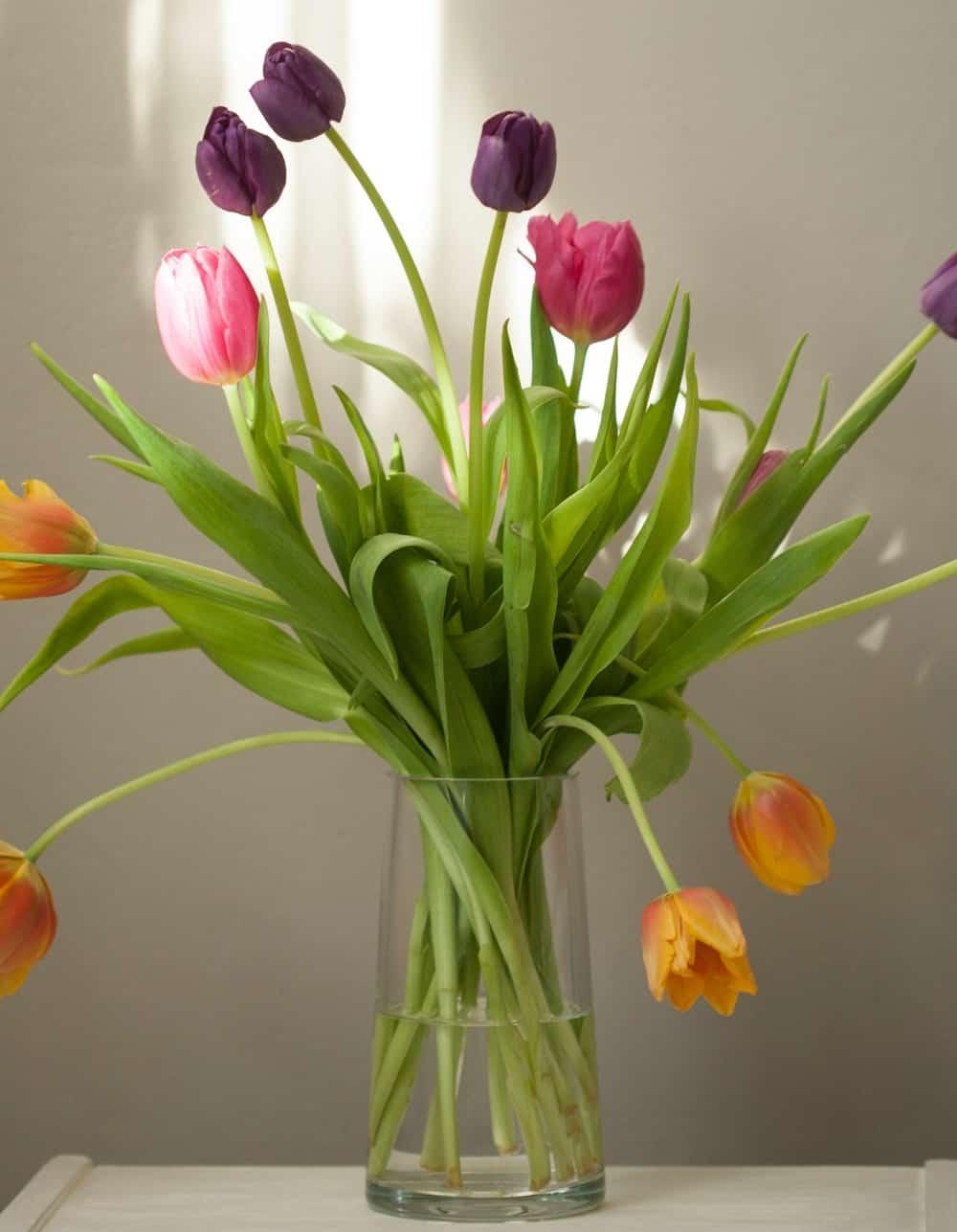 aby tulipány vydržali