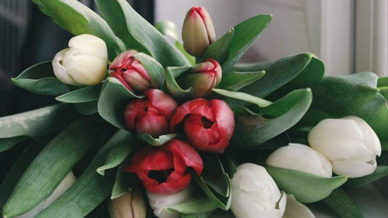 aby tulipány dlhšie vydržali