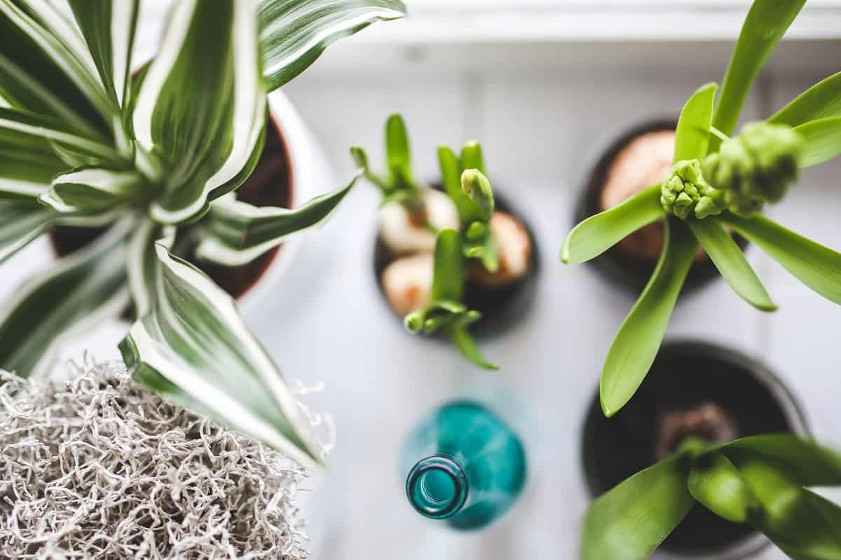 umelé rastliny