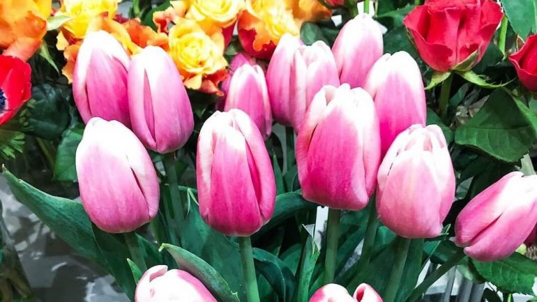 Ruža, tulipán alebo karafiát. Čo vyjadrujú tieto a iné darované kvety?
