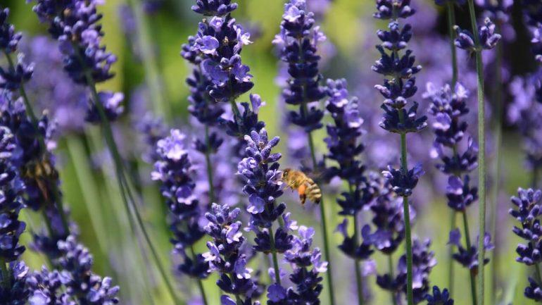 Bylinky ako prírodné repelenty proti škodcom v záhrade