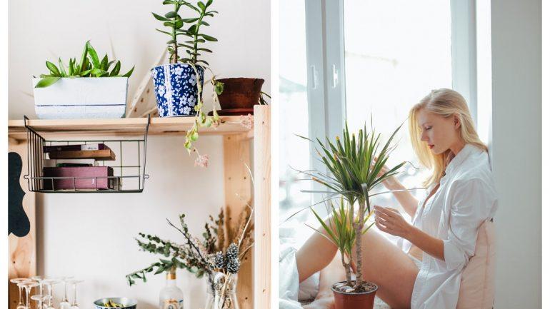 aby vyzerali umelé rastliny ako živé
