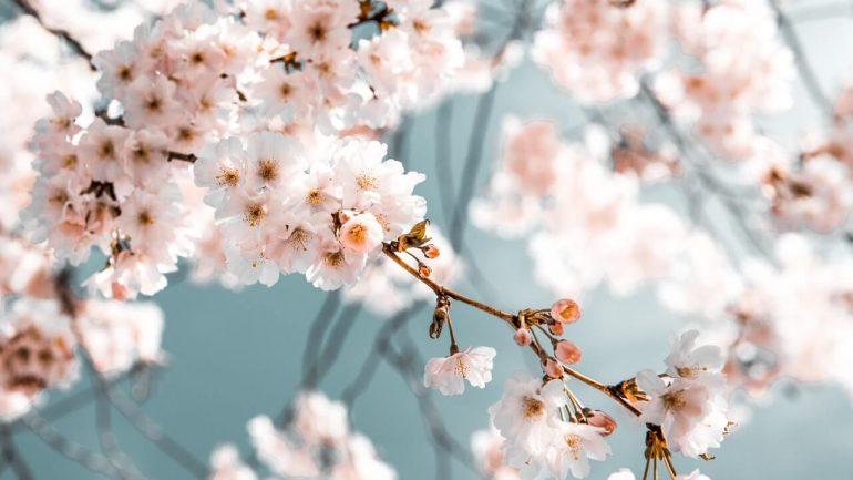 Ovocné stromy a kríky potrebujú ošetriť: Trápia ich prezimujúci škodcovia a zimné choroby!