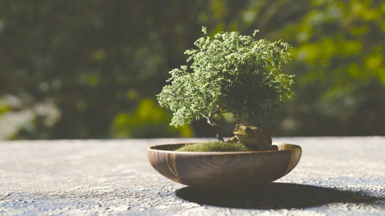 Ako pestovať bonsaj? Tu sú praktické rady