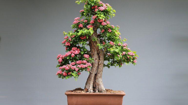 Bonsaje – miniatúrna dokonalosť v kvetináči