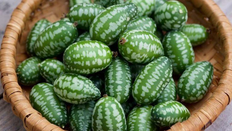Miniatúrne plody: Pidi jahôdky, melónik či baklažánik si môžete pestovať aj vo vašej záhrade!