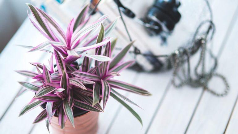 5 dôležitých zásad pri polievaní izbových rastlín