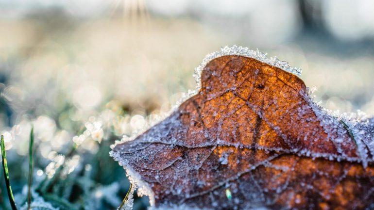 Pozor na jarné mrazy: Čím ohrievať pôdu na záhrade?