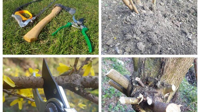 Jarná renovácia a úprava záhrady: Čo je dôležité urobiť ešte tento týždeň?