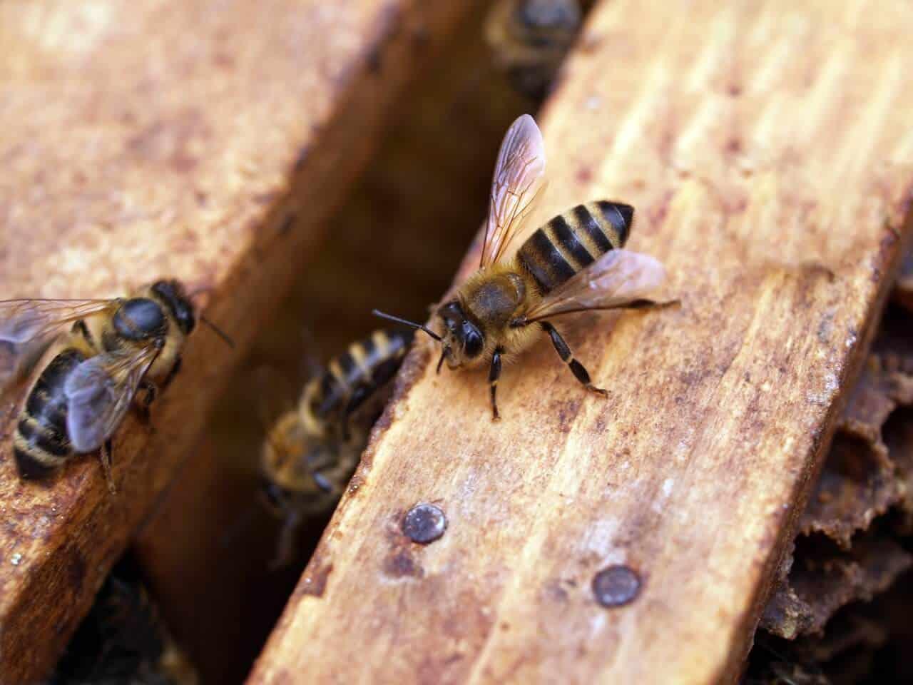 ako prilákať včely