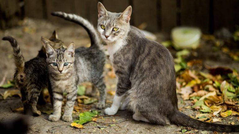 Najčastejšia mačacia skrýša: Kde hľadať na pozemku svoju cicu?