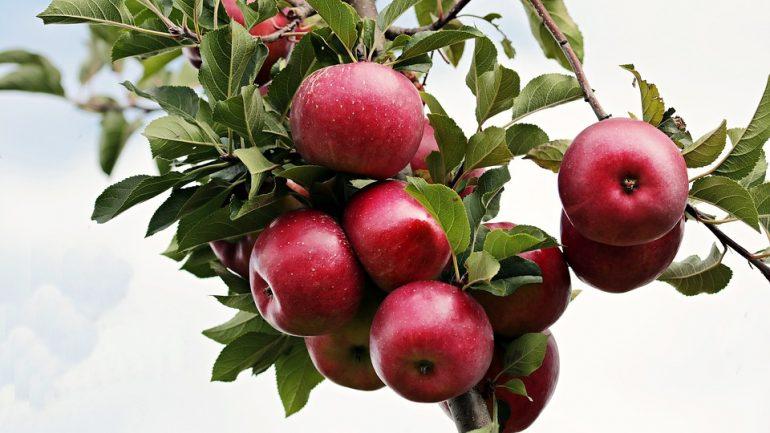 apple-2788599_960_720