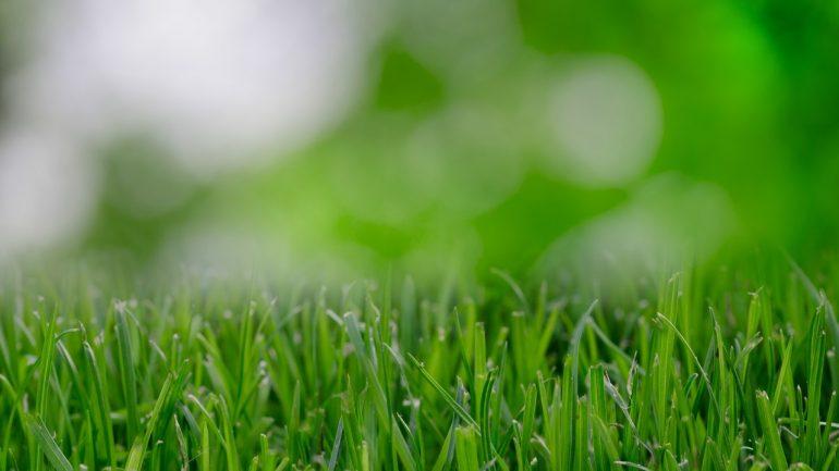 Pár rád trávnikovej medicíny: Ako obnoviť váš zničený trávnik?