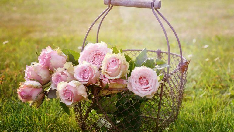 Pre krásnu a zdravú záhradu. Ako a čím prihnojovať kvety?