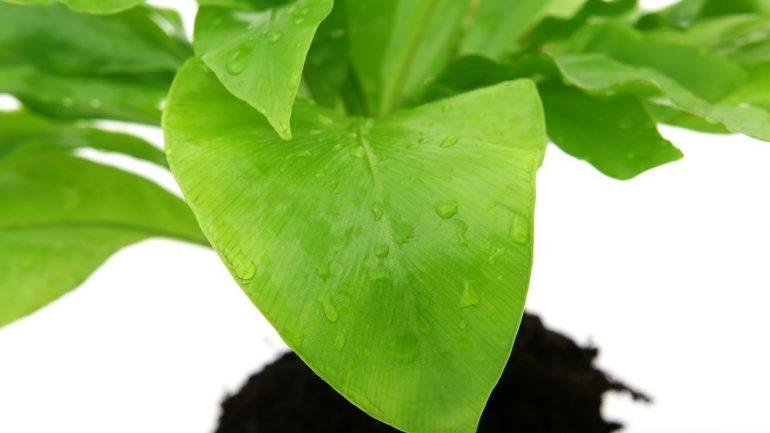 Nadmerné polievanie. Skutočne to najhoršie, čo môžete izbovým rastlinám spraviť?