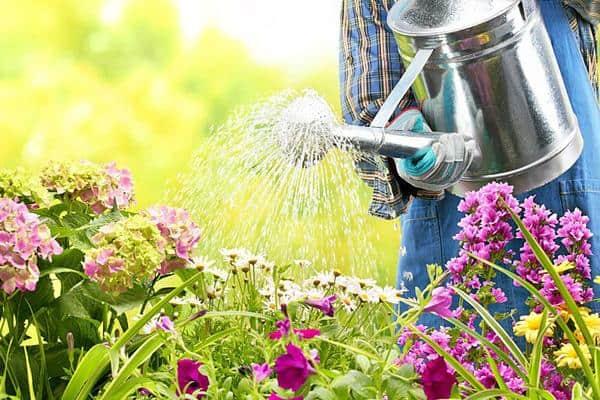 polievanie záhrady