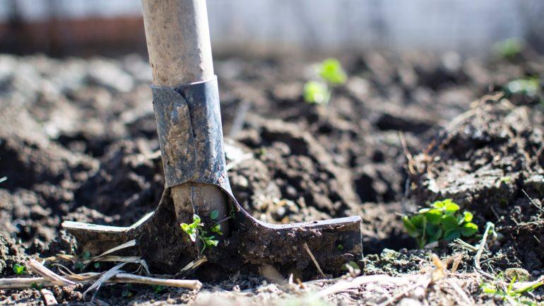 Po zbere prvých plodov: Vyčistite, prekyprite a prihnojte záhony