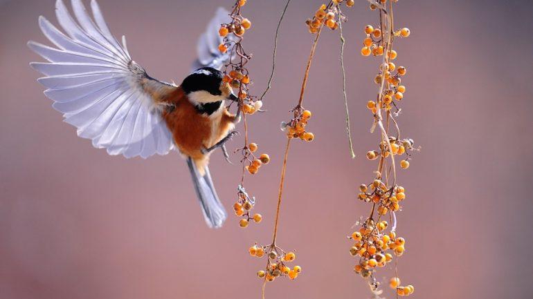 Aby záhradka ožila! 6 spôsobov, ako prilákať motýle a vtáčiky
