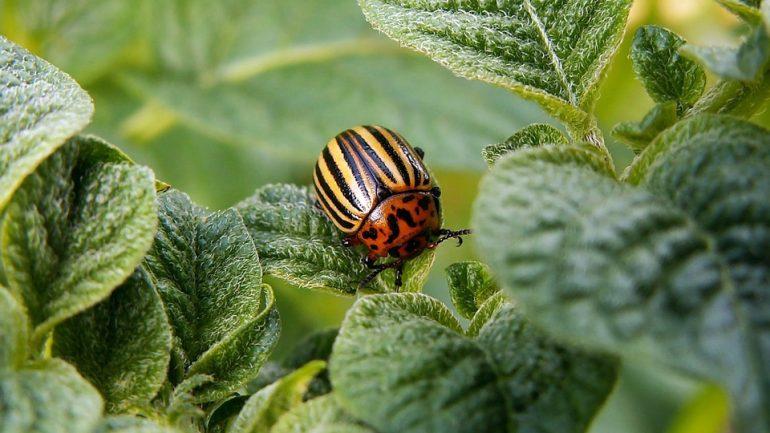 Ochráňte svoju záhradu proti chorobám, škodcom a burinám. Ako na to?