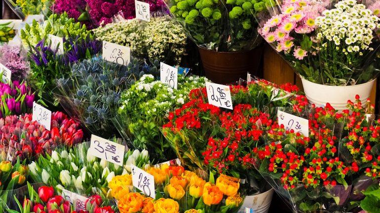 Vyvarujte sa ich! Najčastejšie chyby pri kupovaní nových rastlín