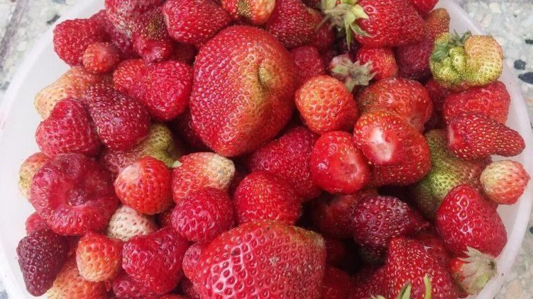 Chutný recept na jahody vo vlastnej šťave