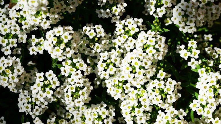 Najlepšie izbové aj vonkajšie rastliny do závesných košíkov, časť druhá